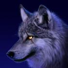 Avatar de Wolf Rainer