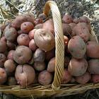 Avatar de patatas