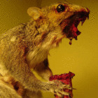 Avatar de Zombie_Squirrel