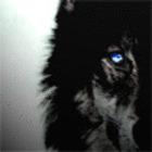 Avatar de ulvarg