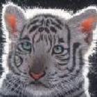 Avatar de tigresita